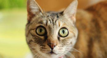 Gato recién llegado a casa. ¿Cuánto tarda en adaptarse y acostumbrarse?