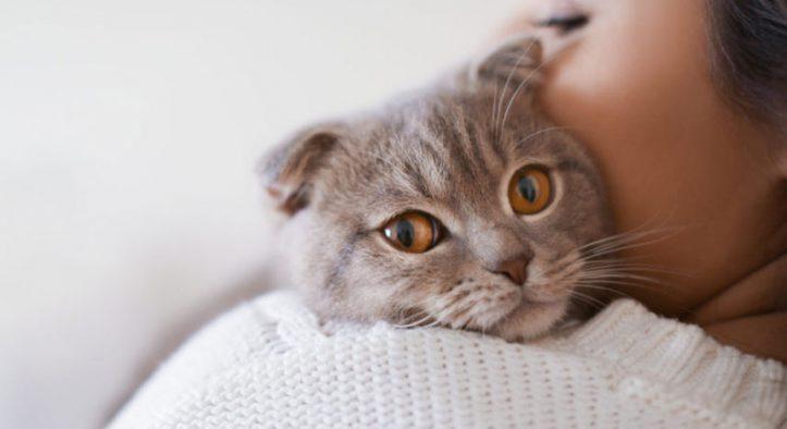 El vómito de mi gato huele muy mal, ¿está enfermo? – Causas y solución