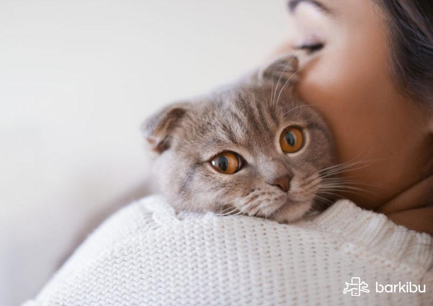 gato duerme encima de mi