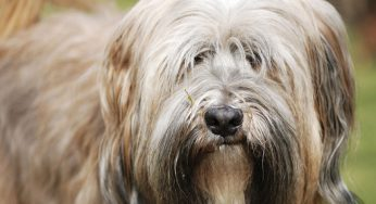 Tipos de vómitos en perros por color y su significado