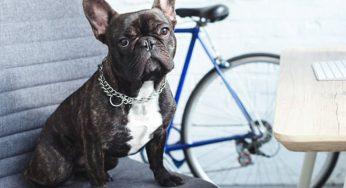 ¿Cómo sacar una basura del ojo de un perro y limpiarlo bien?