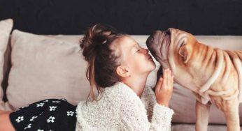 ¿Cuánto tarda un perro en acostumbrarse a estar solo?