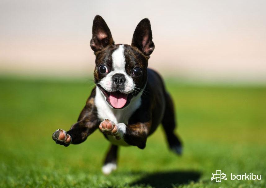 parvovirus en perros síntomas