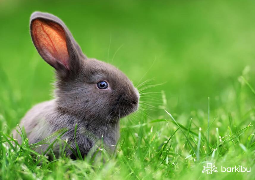 alimentacion en conejos
