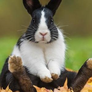 Mi conejo está tumbado y no se mueve, ¡pero respira!