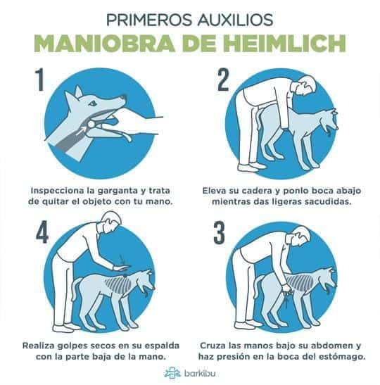 maniobra heimlich perros