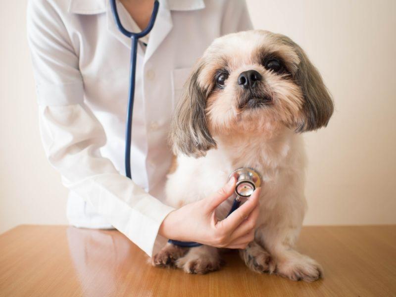 veterinario cerca de mí
