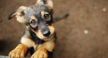 Hematoquecia, melena y gastroenteritis hemorrágica en perros