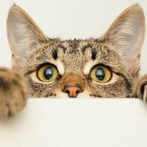 ¿Un gato puede tener la rabia? - Síntomas, cura y contagio en humanos