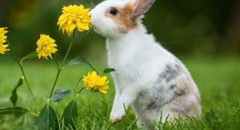 ¿Cómo cortar las uñas a un conejo que no se deja? ¿Se puede?