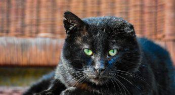 ¿Por qué mi gato se lame mucho? – Genitales, barriga, nariz y pecho