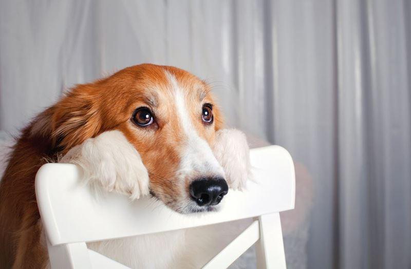 como hacer que mi perro de la pata