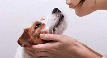 ¿Qué pasa cuando un perro vomita baba blanca, flemas o saliva?