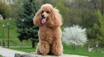 ¿Cómo hacer que mi perro me obedezca solo a mí cuando lo llamo?