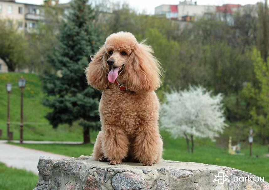 comportamiento de perros