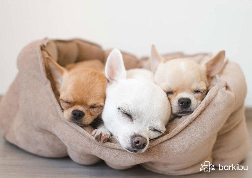 ¿Qué pasa cuando un perro vomita baba blanca o saliva?