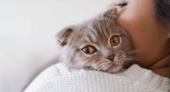 A mi gato no le gusta que lo acaricien, ¡se va si lo tocas!
