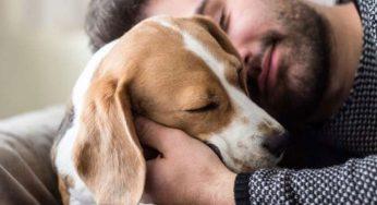 Consecuencias del moquillo nervioso en perros, ¿tiene cura, cuánto dura?