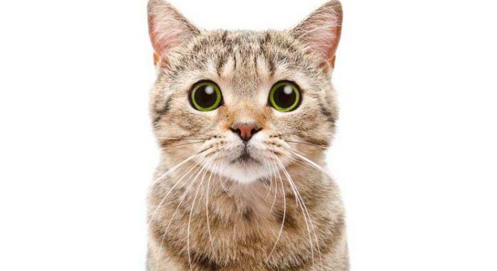 Mis gatos no se reconocen, no se llevan bien y se pelean de repente