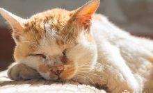 gato heces malolientes