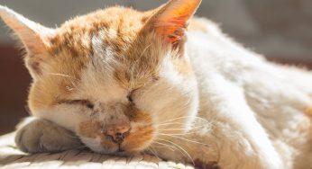 ¿Cuánto duerme un gato en invierno? ¿y si es mayor o bebé?