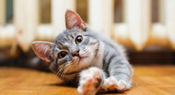 +50 Nombres pegadizos para gatos, originales y con significado