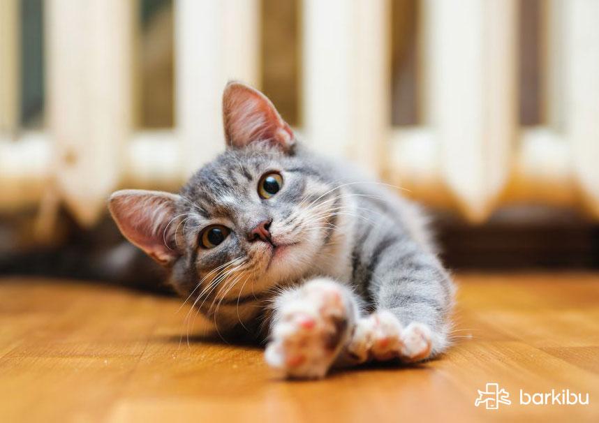Qué sirve para hacer vomitar a un gato envenenado
