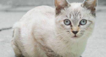 ¿Un gato puede tener la rabia? – Síntomas, cura y contagio en humanos