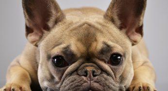 Tipos de mocos en perros por colores – con tos, en la garganta y qué darle