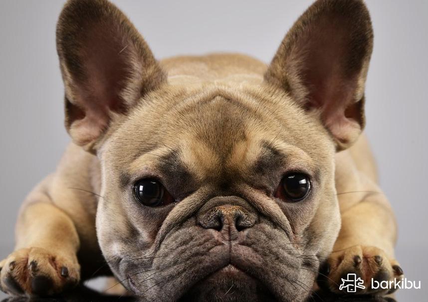 cuerpo extraño en perros