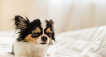 Síntomas de estrés y ansiedad en perros y qué hacer al detectarlos