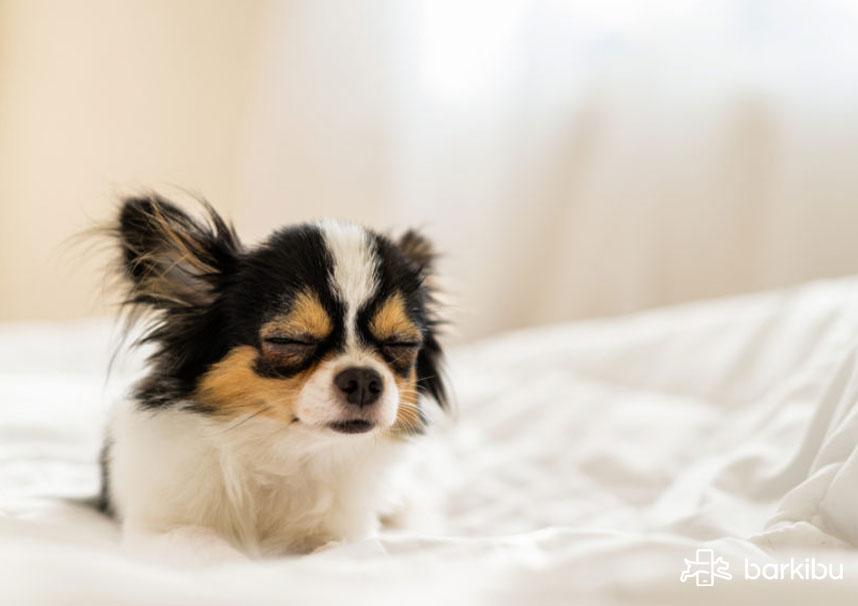 sintomas de estres en perros y ansiedad