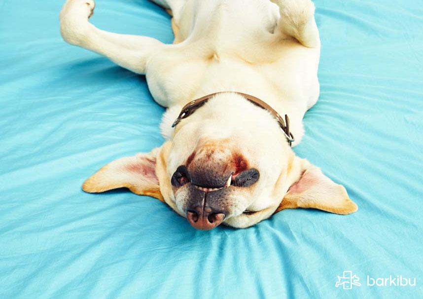 parasitos externos e internos perros