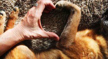 Tu app de consulta veterinaria: 'mi veterinario en una aplicación'