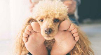 ¿Por qué mi perro no para de llorar? Causas y Soluciones más comunes