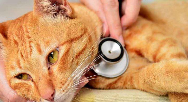 Tipos de vómitos en gatos – verde, transparente, marrón, sangre, espuma