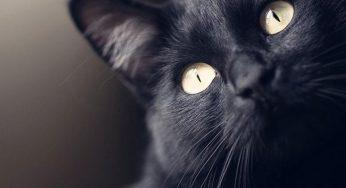 Mi gato tiene una pupila dilatada y otra no, ¡está más grande que la otra!