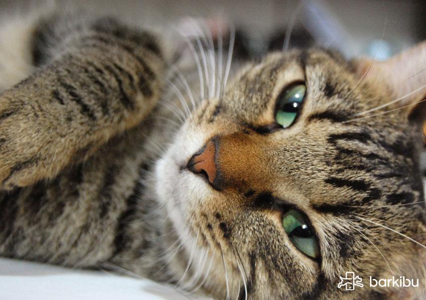 gato sindrome de horner