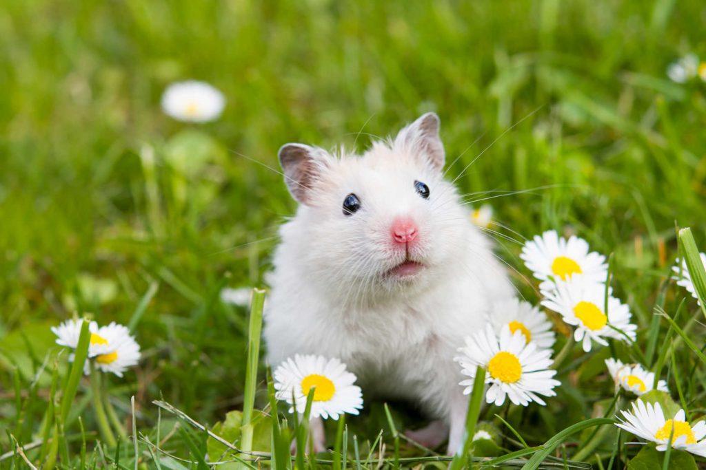 mi hamster hace ruido