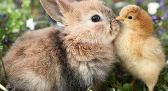 ¿Los conejos ven en la oscuridad de noche? ¿Cómo ven a las personas?