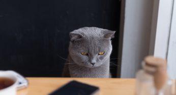 ¿Por qué mi gato tiene caspa? Se le cae cuando lo cepillo