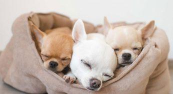 ¿Cuándo deja de ser cachorro un perro mestizo? ¿A qué edad se relaja?