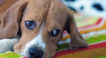 Mi cachorro no quiere comer pienso y no bebe agua – Solución