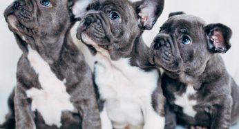 ¿Los perros pueden comer miel o canela? ¿Y para la tos? ¿No es buena?
