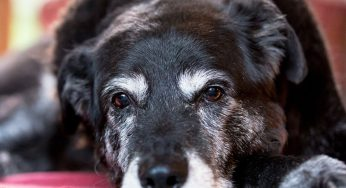 ¿Hay que tapar a los perros para dormir en invierno? ¿Duermen afuera?