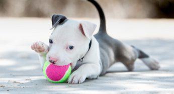 Cómo saber si mi perro tiene pulgas, qué hacer y cómo eliminarlas